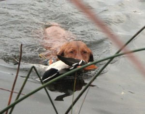 Duck Lake 2012 2012-10-27 029