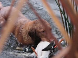 Duck Lake 2012 2012-10-27 030